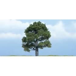 Oak. WOODLAND TR1606