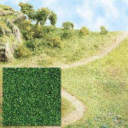 Hojarasca verde intermedio.