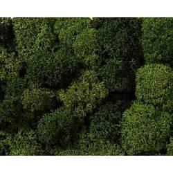 Musgo, verde mixto.
