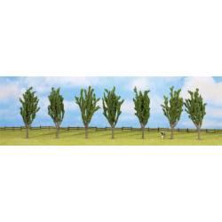 Poplars. NOCH 25098