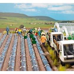 Asparagus field. BUSCH 7176