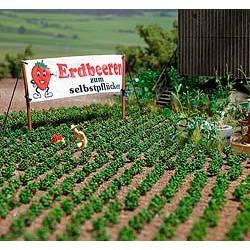 Strawberry plantas. BUSCH 1265