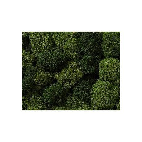 Musgo, verde. NOCH 08621