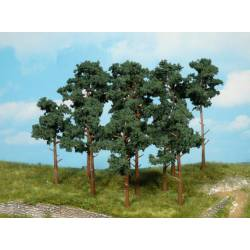 Scots pine trees. HEKI 1151