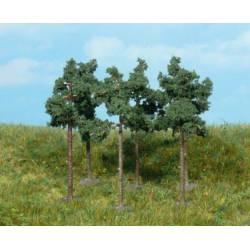 Scots pine trees.
