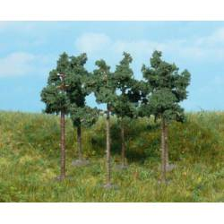Scots pine trees. HEKI 1152