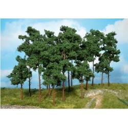 Scots pine trees. HEKI 1954