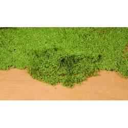 Leaf foliage, medium green. HEKI 1676