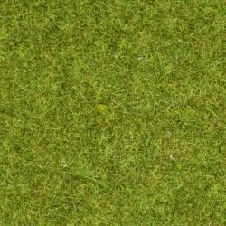 Scatter grass meadow.