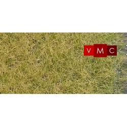 Wild grass.