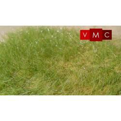 Tableland grass, 6 mm.