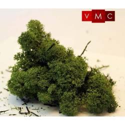 Musgo de islandia, verde medio.