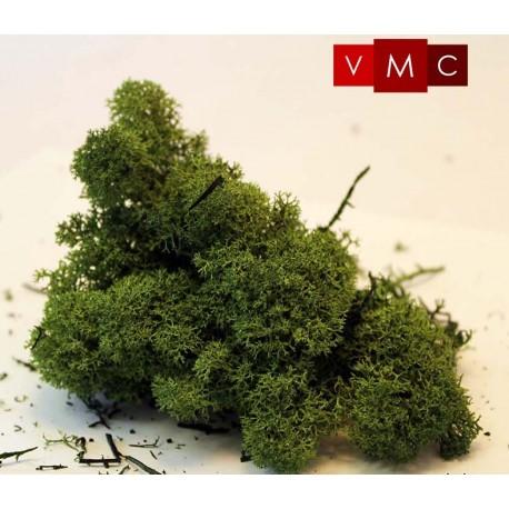 Musgo de islandia, verde medio. VMC 79007