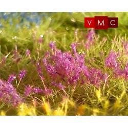 Flores, ipomea violeta.