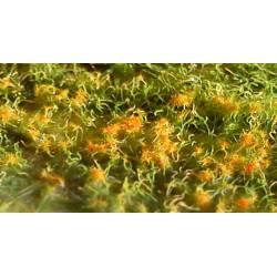 Flores, calathea crocata.