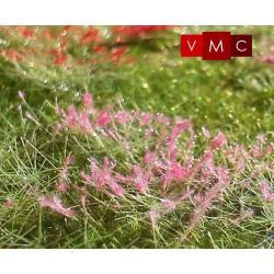 Flores, mirabilis. VMC 72007