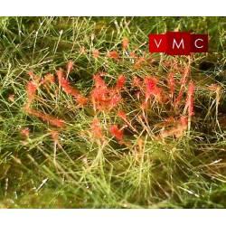 Red oleander. VMC 72003