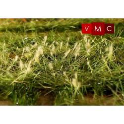 Horseweed. VMC 72002