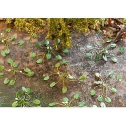 12 water lilys. FALLER 181260