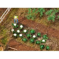 Green cabbage and cauliflower. FALLER 181257