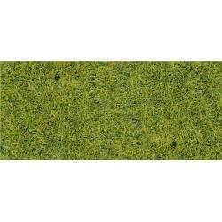 Hierba alta, verde bosque.