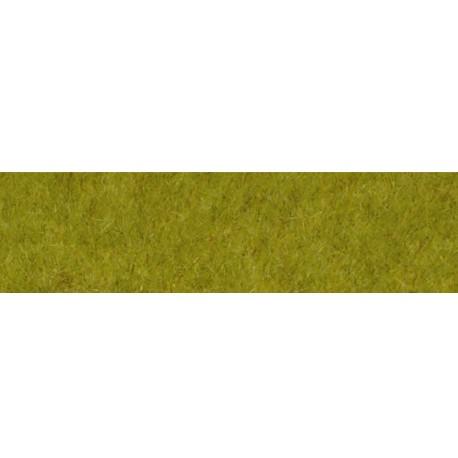 Wild grass. HEKI 1860
