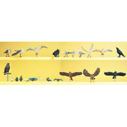 Aves salvajes.