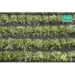 Campo de flores blancas. SILHOUETTE 767-21S