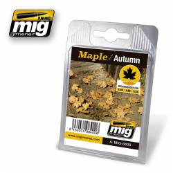 Maple, autumn. AMIG 8400