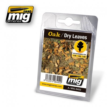 Oak, dry leaves. AMIG 8402