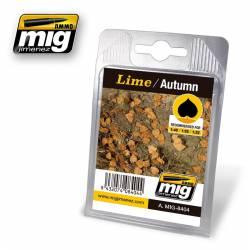 Lime, autumn. AMIG 8404