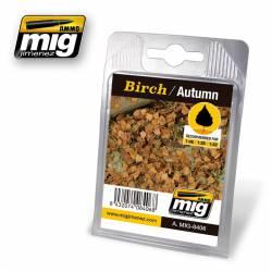 Birch, autumn. AMIG 8406