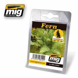 Plantas: Helechos. AMIG 8450