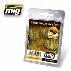 Plants: Common sedge.