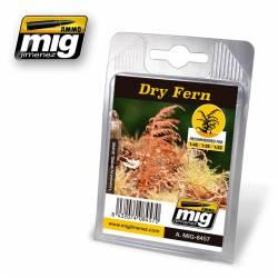 Plantas: Helecho seco. AMIG 8457