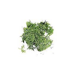 Musgo de Islandia verde.