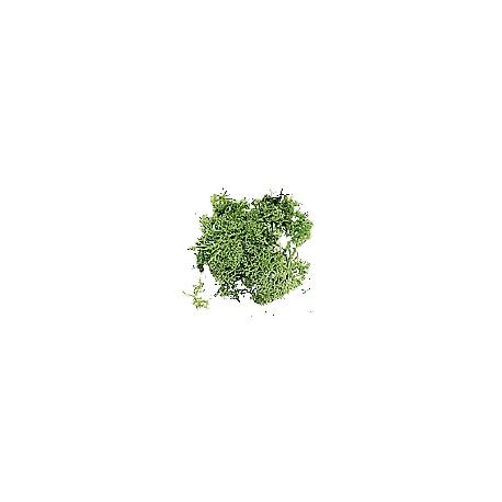 Musgo de Islandia verde. DOMUS KITS 3904