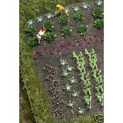 Plantas de huerta: hortalizas y lechugas.