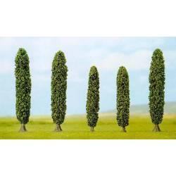 5 silver poplars.