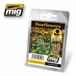 Plantas: girasoles. AMIG 8458