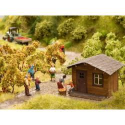 Cosecha de manzanas. NOCH 14213324