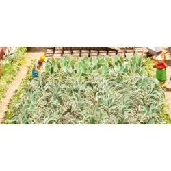 Plantas de la huerta. NOCH 14107