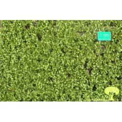 Oak foliage, spring. SILHOUETTE 980-21S