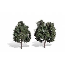 2 árboles, frondosos.