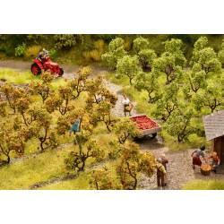 Plantación de árboles. NOCH 21530