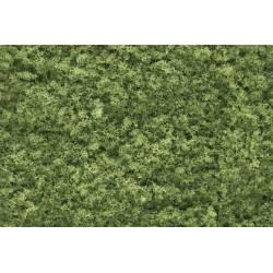Follaje verde claro.