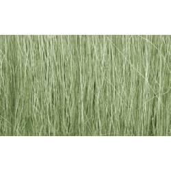 Hierba alta color verde claro.