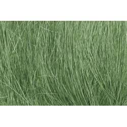 Field grass.