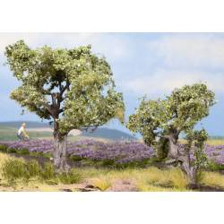Olive Trees. NOCH 21995