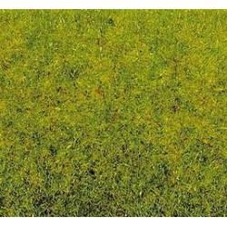 Grass spring meadow. NOCH 08300